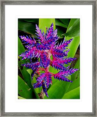 Framed Print featuring the photograph Brilliant And Bold by Frank Wickham