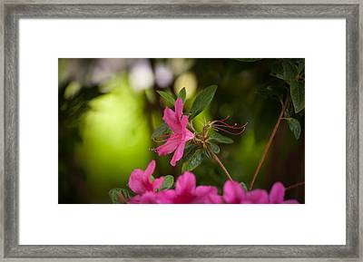 Brilliant Beauty Framed Print by Mike Reid