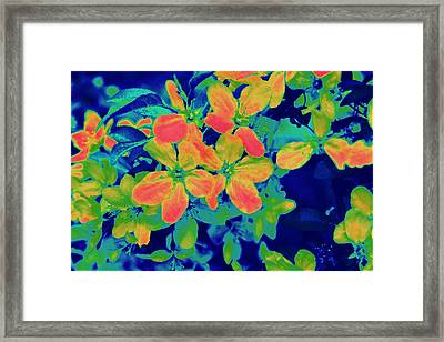 Brilliant Blossoms II Framed Print by Tessa Murphy