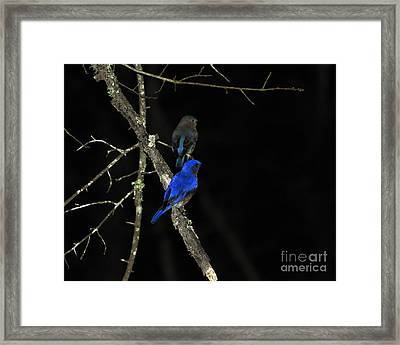 Brilliant Blues Framed Print by Al Powell Photography USA