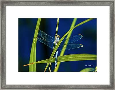 Brilliant Dragon Fly Framed Print