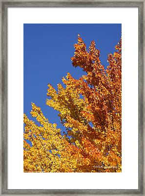 Framed Print featuring the photograph Brilliant Fall Color And Deep Blue Sky by Mick Anderson