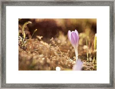 Brilliant Flowers Framed Print by Odon Czintos