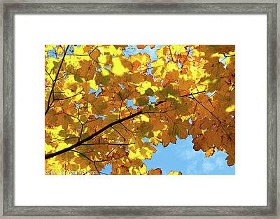 Framed Print featuring the photograph Brilliant Imperfections by Rachel Cohen
