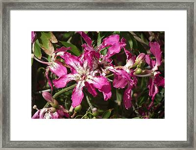 Brilliant Purpl White Flowers Framed Print