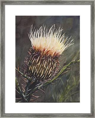 Brilliant Thisle Framed Print by Toni Roark