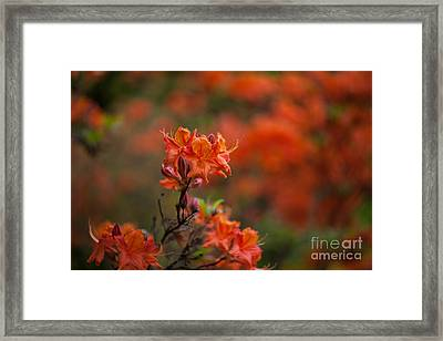 Brilliantly Rouge Framed Print by Mike Reid