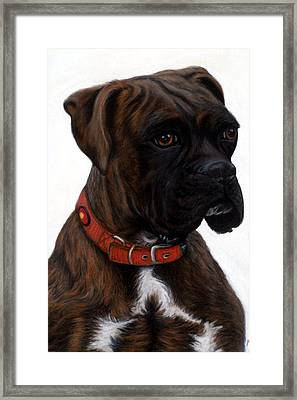 Brindle Boxer Framed Print by Michelle Harrington