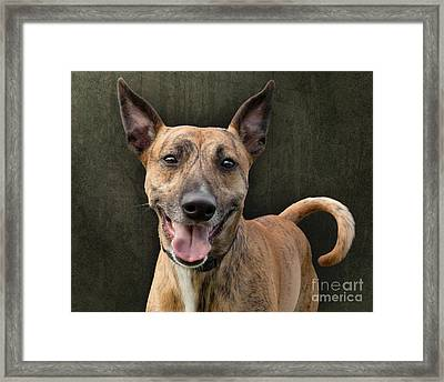 Brindle Dog With Great Ears Framed Print