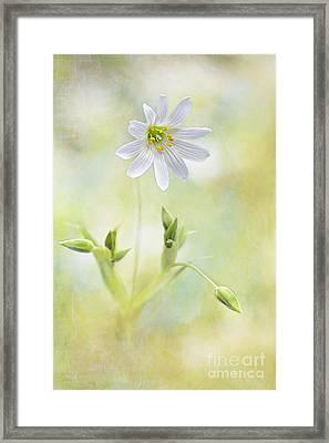 Bring Me Sunshine Framed Print by Jacky Parker