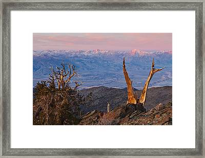 Bristlecone Bishop Sunrise Framed Print by Nolan Nitschke