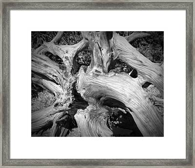 Bristlecone Pine Roots White Mountains Ca Framed Print by Troy Montemayor