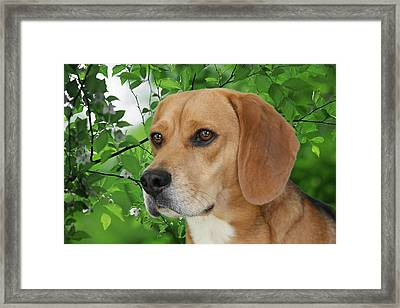 British Beauty Framed Print by Christine Till