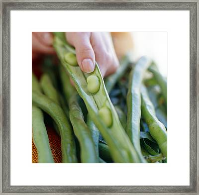Broad Beans Framed Print by David Munns