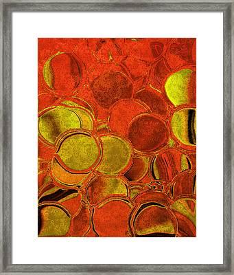Brocade Circles Framed Print by Bonnie Bruno