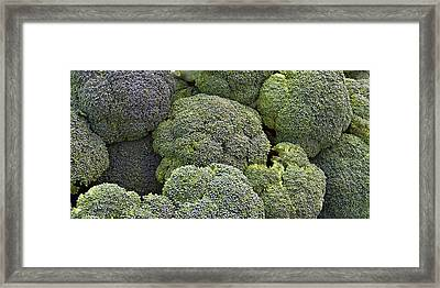 Broccoli Framed Print by Forest Alan Lee