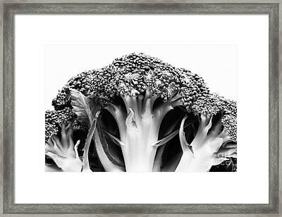 Broccoli On White Background Framed Print by Gaspar Avila
