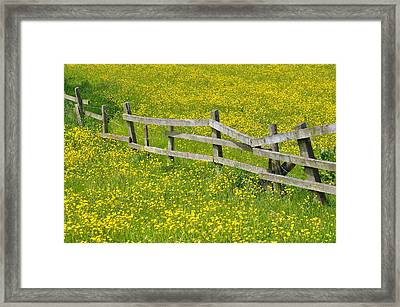Broken Fence And Buttercup Field Framed Print by Photos by R A Kearton