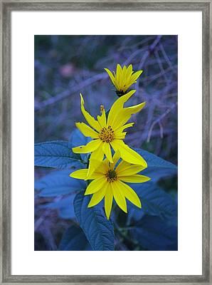 Broken Petals Framed Print