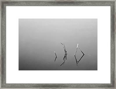 Framed Print featuring the photograph Broken Reeds by Dan Wells