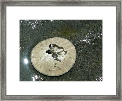 Broken Sand Dollar Framed Print by Lori Seaman