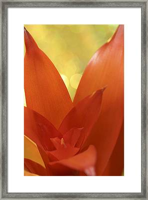 Bromeliad Framed Print by Al Hurley