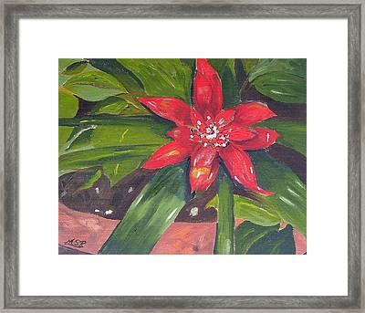 Bromeliad Bloom Framed Print by Maria Soto Robbins
