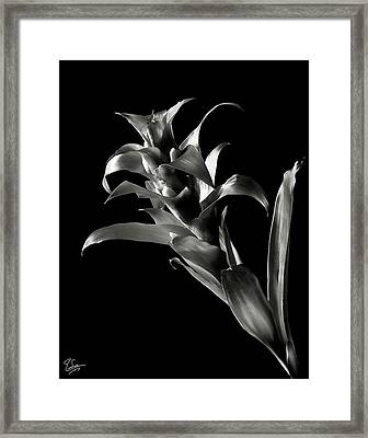 Bromeliad In Black And White Framed Print by Endre Balogh