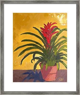 Bromeliad  Framed Print by Maria Soto Robbins