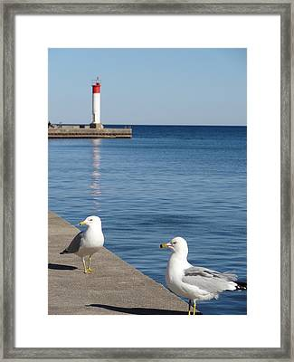 Bronte Lighthouse Gulls Framed Print