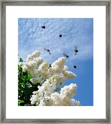 Bronze Bugs Fly In The Blue Sky Framed Print