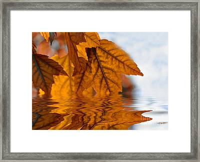 Bronze Reflections In Autumn Framed Print