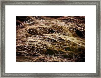 Bronzed Grasses. Framed Print by Clare Bambers