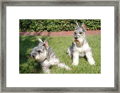 Brothers Framed Print by Diane Ferguson