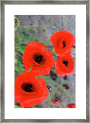 Brothers Of Red Framed Print by Empty Wall