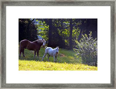 Brown And White Horse-19 Framed Print by Eva Thomas