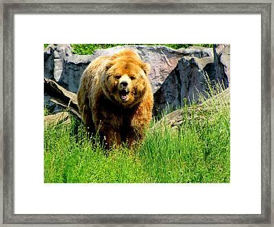Brown Bear Framed Print by Barbara Walsh