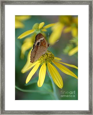 Brown Butterfly Framed Print by Patty Vicknair