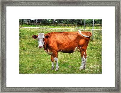 Brown Cow Framed Print by Mats Silvan