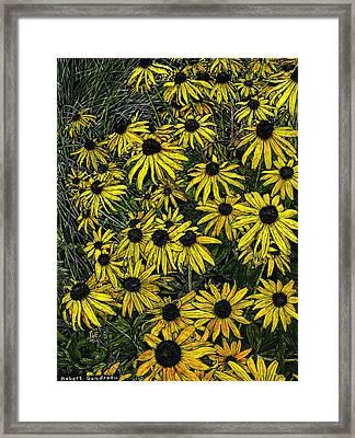 Brown Eyed Susans Framed Print by Robert Goudreau