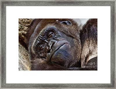Brown Eyes Framed Print by Jill Smith