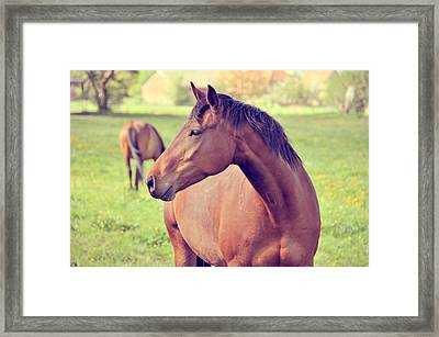 Brown Horse Framed Print by Euge de la Peña