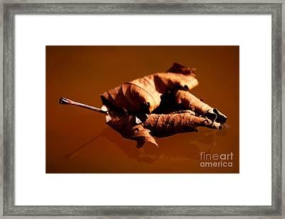 Brown In Brown Framed Print by Thomas Splietker