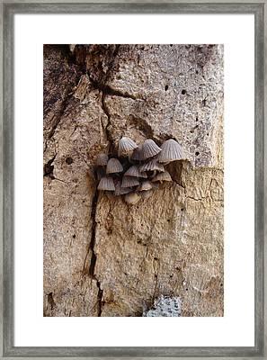 Brown Mini Mushrooms Framed Print by Koral Garcia