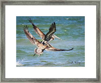 Brown Pelicans Taking Flight Framed Print