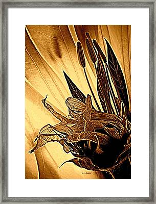 Brown Wildflowers Framed Print by Chris Berry
