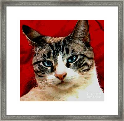 Brutus The Magnificent Framed Print