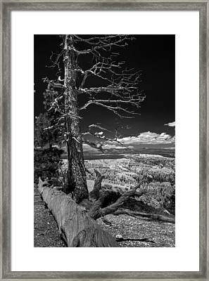 Bryce Canyon - Dead Tree Black And White Framed Print
