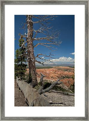 Bryce Canyon - Dead Tree Framed Print