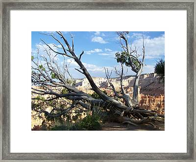 Framed Print featuring the photograph Bryce Canyon by Dany Lison